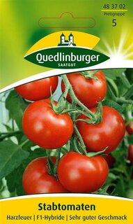 Stabtomate /'Harzfeuer/' Saatgut Tomate 40361