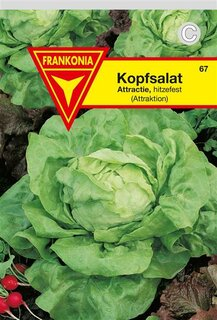 Kopfsalat Attraktion